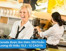 Chính sách việc làm và định cư mở rộng cho sinh viên quốc tế tại Canada