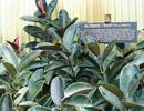 """7 loại cây """"thần kỳ"""" giúp bầu không khí nhà bạn luôn trong lành"""