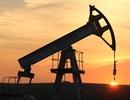 Giá dầu nhích tăng trở lại