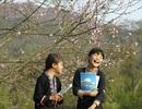 Lên Lào Cai ngắm hoa đào nở muộn