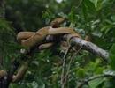 Rợn người trước hòn đảo chứa nhiều rắn nhất hành tinh