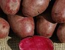 Khoai tây tím đặc biệt tốt cho sức khỏe
