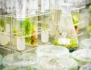 Thành lập Khu Công nghệ cao công nghệ sinh học Đồng Nai