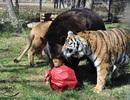 Gấu, sư tử, hổ không rời nhau nửa bước suốt 15 năm qua