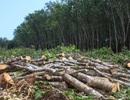 Không cần thiết chặt phá rừng để sản xuất thêm lương thực