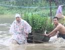 Nam Trung Bộ tiếp tục có mưa lớn trong vài ngày tới