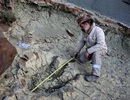 Dấu chân khủng long lớn nhất từng thấy ở Bolivia