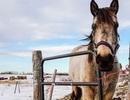 Ngựa có thể sử dụng các ký hiệu để giao tiếp với người