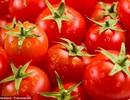 Vì sao không nên để cà chua trong tủ lạnh?