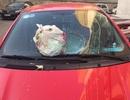 Nữ tài xế hoảng hốt vì túi rác 'trên trời bay xuống' vỡ kính ô tô
