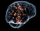 Tế bào thần kinh lường trước phản ứng của cơ thể khi ăn và uống nước
