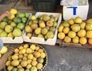 Các loại hoa quả Việt nên mua vào thời điểm này