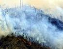 Rừng quốc gia Hoàng Liên cháy lớn ngày mùng 3 Tết