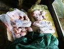 Lào Cai bắt giữ hơn 1 tấn thịt bò và nội tạng động vật nhập lậu quá đát