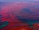 Thủy triều đỏ nguy hại tới đâu?