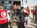 Quân đội Syria giành lại quyền kiểm soát thị trấn Daraya
