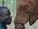 Bức ảnh đẹp thể hiện sự kết nối giữa con người và loài voi