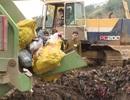 Lào Cai: Thu giữ và tiêu hủy hơn 500 kg xương ngựa không rõ nguồn gốc