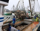 Ngôi làng giàu nhất Nhật Bản trầy trật tuyển công nhân