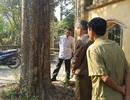 Khuất tất vụ mua bán cây sưa 24,5 tỉ đồng ở Bắc Ninh: Dân chờ một lời hứa đúng hẹn