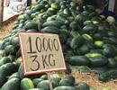 Dưa hấu rớt giá thảm, 10.000 đồng/3 kg