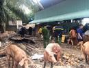 6 xe cứu hỏa cùng hàng chục cảnh sát chữa cháy trại nuôi heo