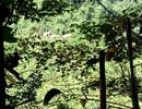 Voi rừng liên tục xuất hiện ở bìa rừng để kiếm ăn