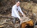 """""""Cạo trọc"""" rừng đầu nguồn để trồng rừng thay thế (?!)"""