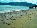 Nhận chìm bùn cát xuống biển Quy Nhơn: Lo ngại ảnh hưởng môi trường du lịch
