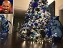 Sao trang hoàng cây thông Noel ra sao