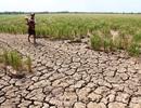 Nông nghiệp Việt Nam phải nhận diện đầy đủ thách thức để hành động