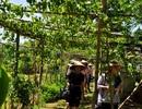 Thêm một làng du lịch cộng đồng mở cửa đón khách