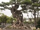 """Mục sở thị những """"siêu cây"""" của lão nông tỷ phú Hà thành"""