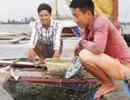 Chàng trai bỏ lương 9 triệu về làng nuôi cá lồng lãi 200 triệu đồng/năm