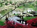 Nghỉ dưỡng phong cách thiền Nhật Bản – Tìm nơi an dưỡng cho tâm hồn