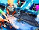 Chuyện ly kỳ về ngôi làng có 5-6 thế hệ đi đánh cá ngừ đại dương