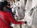 Những hình ảnh phản cảm đầu năm tại ngôi chùa lớn nhất Việt Nam