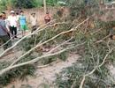 Người lớn bất cẩn lúc chặt cây, 3 học sinh tiểu học nhập viện