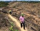 Bí thư huyện khẳng định sẽ khởi tố vụ 20 ha rừng bị chặt phá