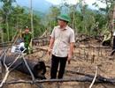 Cử tri Quảng Nam bức xúc với nạn phá rừng