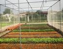 Nhà giàu ăn sạch: Bỏ gần 2 tỷ đồng mua đất tự trồng rau