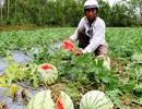 """Trung Quốc ngừng mua, nông sản Việt """"vỡ trận"""" giá giảm mạnh"""