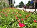 Những con đường rực rỡ sắc hoa nơi miền quê thanh bình