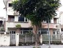 'Chuyện tình ri đô' trong những căn biệt thự bỏ hoang ở Hà Nội