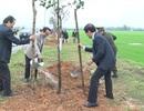 Phát động Tết trồng cây đầu xuân mới