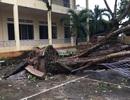 Đắk Lắk cho học sinh nghỉ học khẩn cấp để tránh tác hại cơn bão số 12