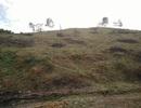 Thanh Hóa: Chặt phá, chuyển đổi đất rừng tràn lan!