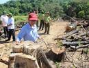 """""""Nếu không tìm ra kẻ chủ mưu vụ phá rừng, coi như hệ thống chính trị thất bại"""""""