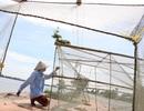 Lênh đênh bắt cá trên cánh đồng Hậu Giang mùa nước nổi