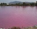Nước trong hồ lớn bất ngờ đổi thành... màu hồng